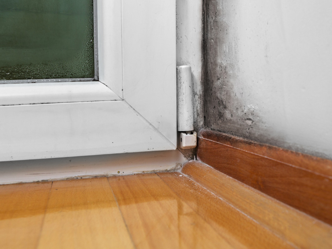 Catch Early Mold Growth Before it Spreads